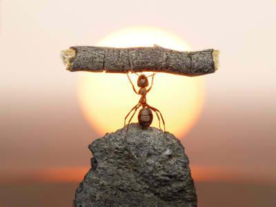 Ant-belief